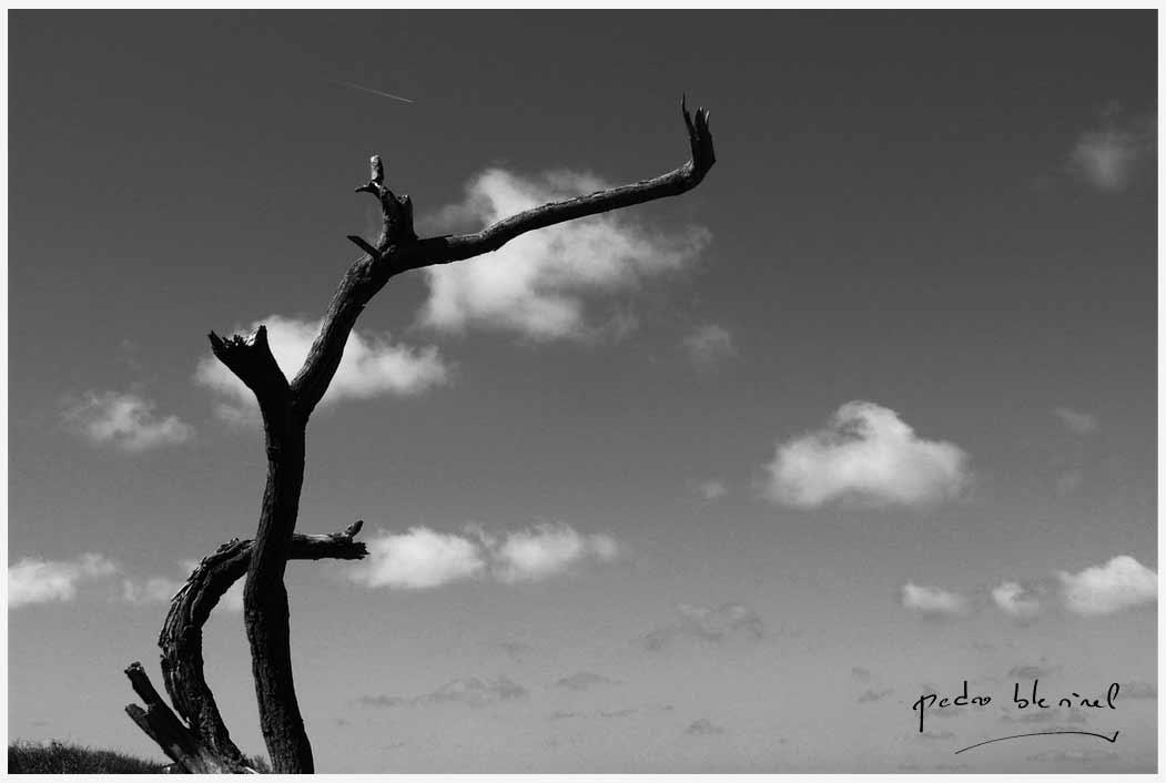 L'arbre qui voulut être un nuage (15/05/17)