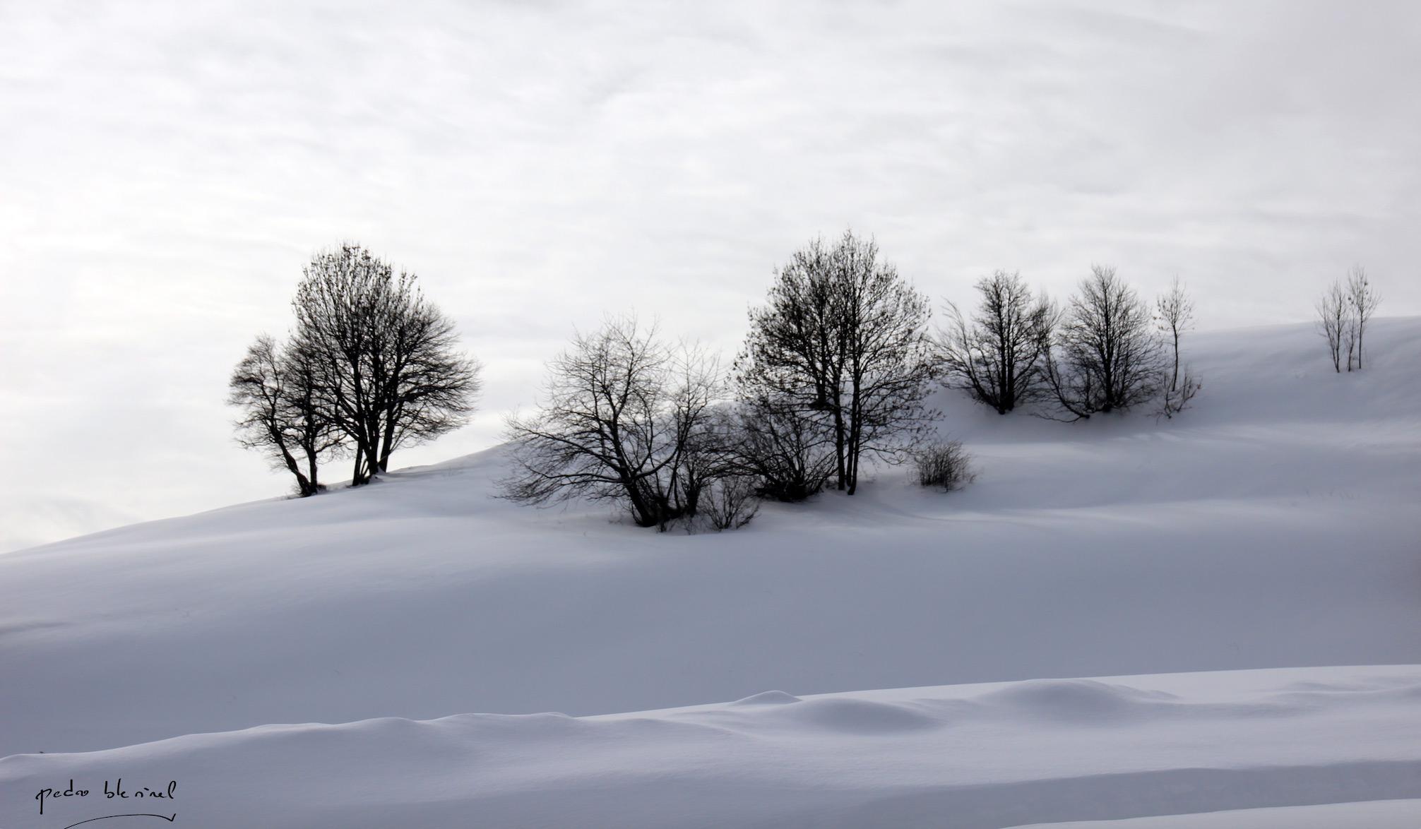 arbres sous la neige 1