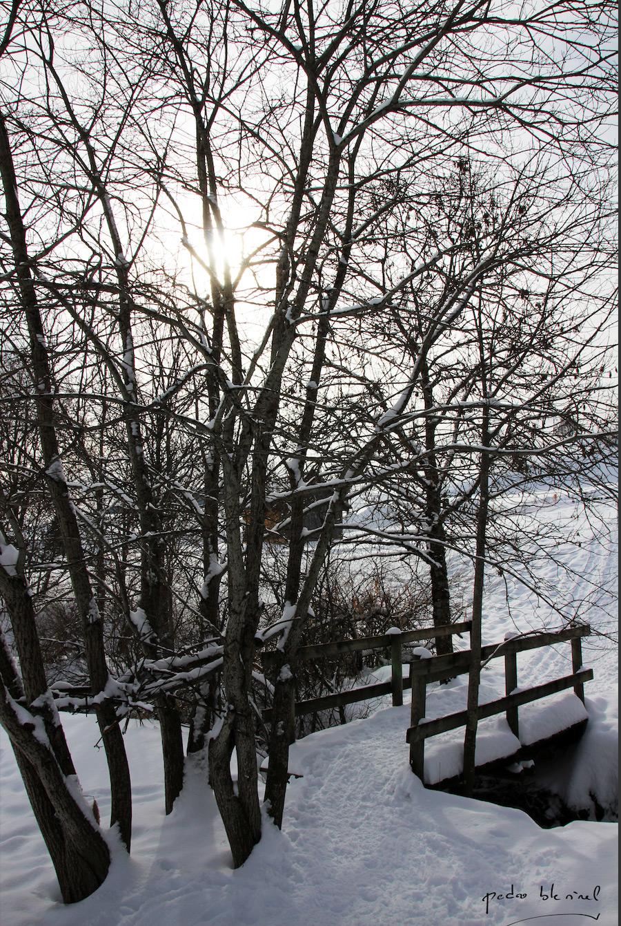 arbres sous la neige 2