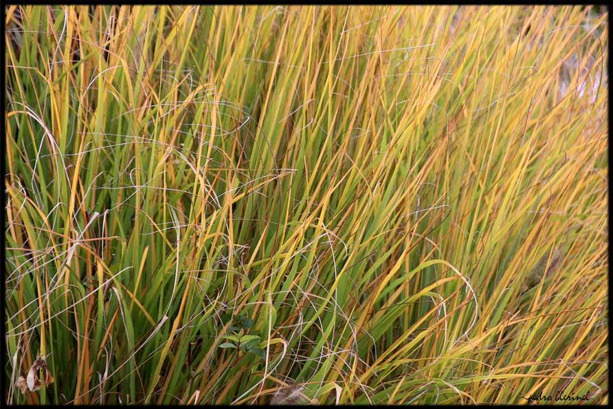 AVESNOIS : un peu d'herbe (03/03/17)