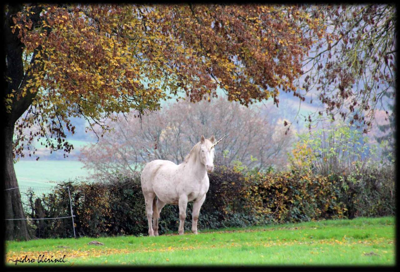 AVESNOIS : la licorne (05/03/17)