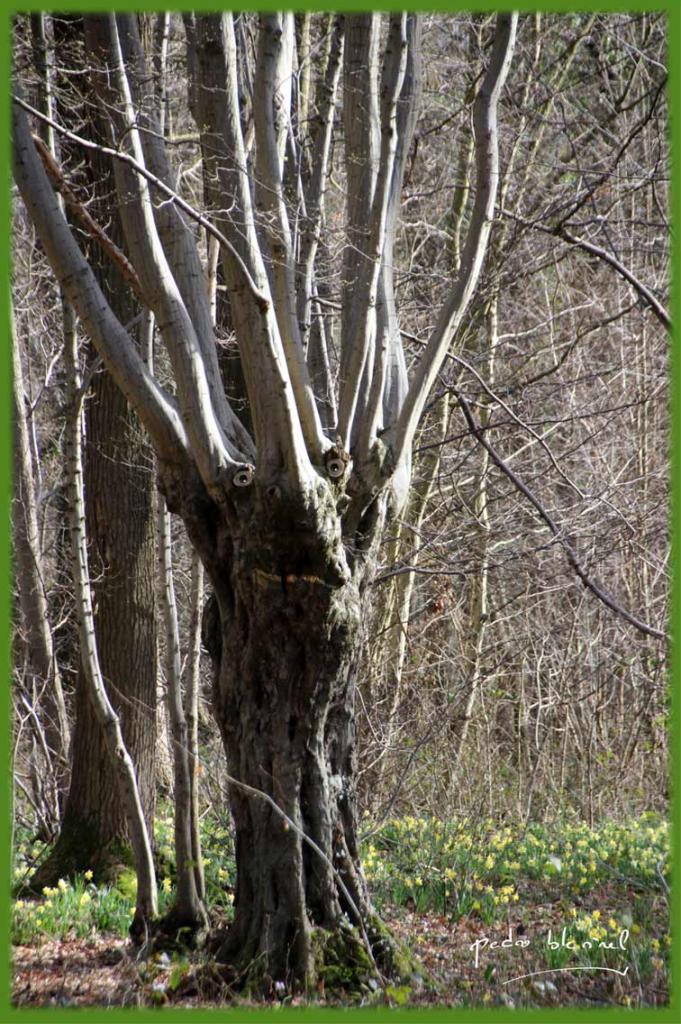 Le caillou qui bique : l'esprit de la forêt (17/03/17)
