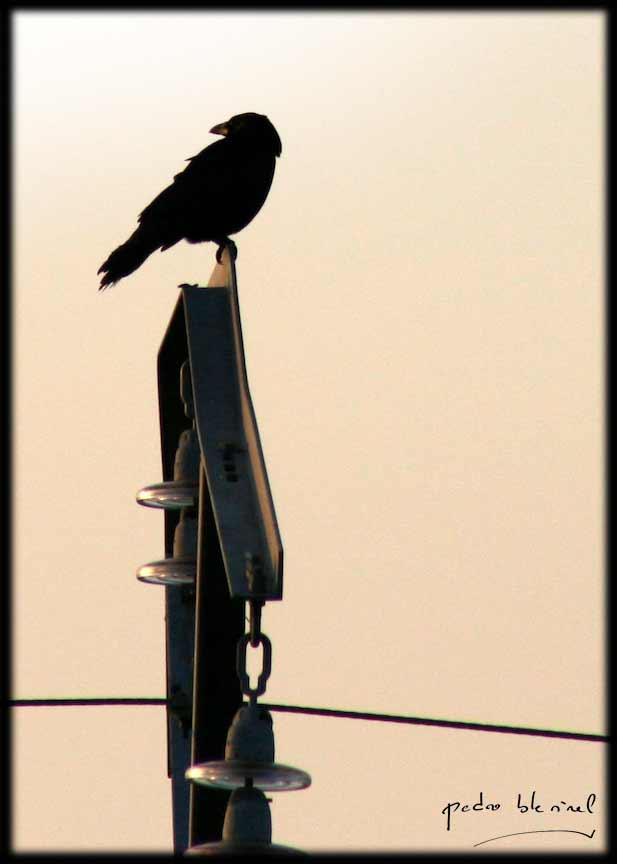Le corbeau survolté (18/05/17)