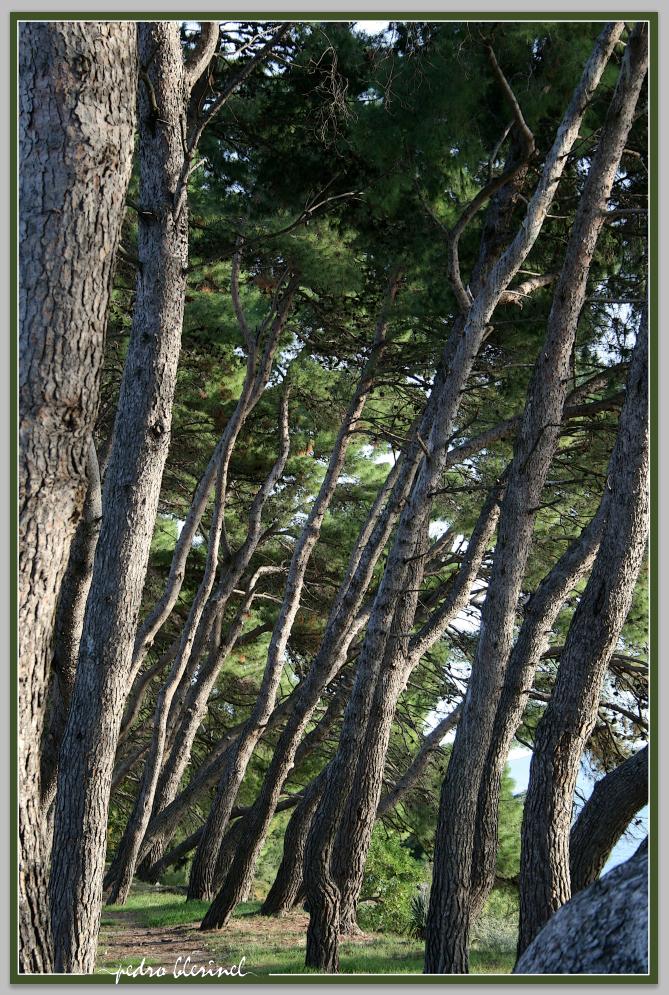 CROATIE : forêt (16/01/17)