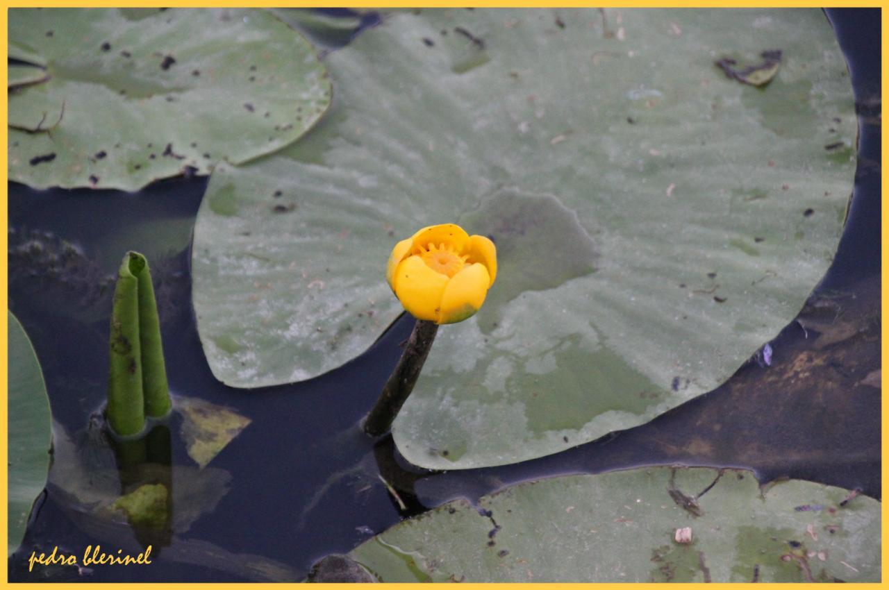 floraison (02/08/17)