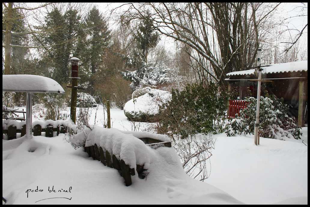 Jardin sous la neige (24/05/17)