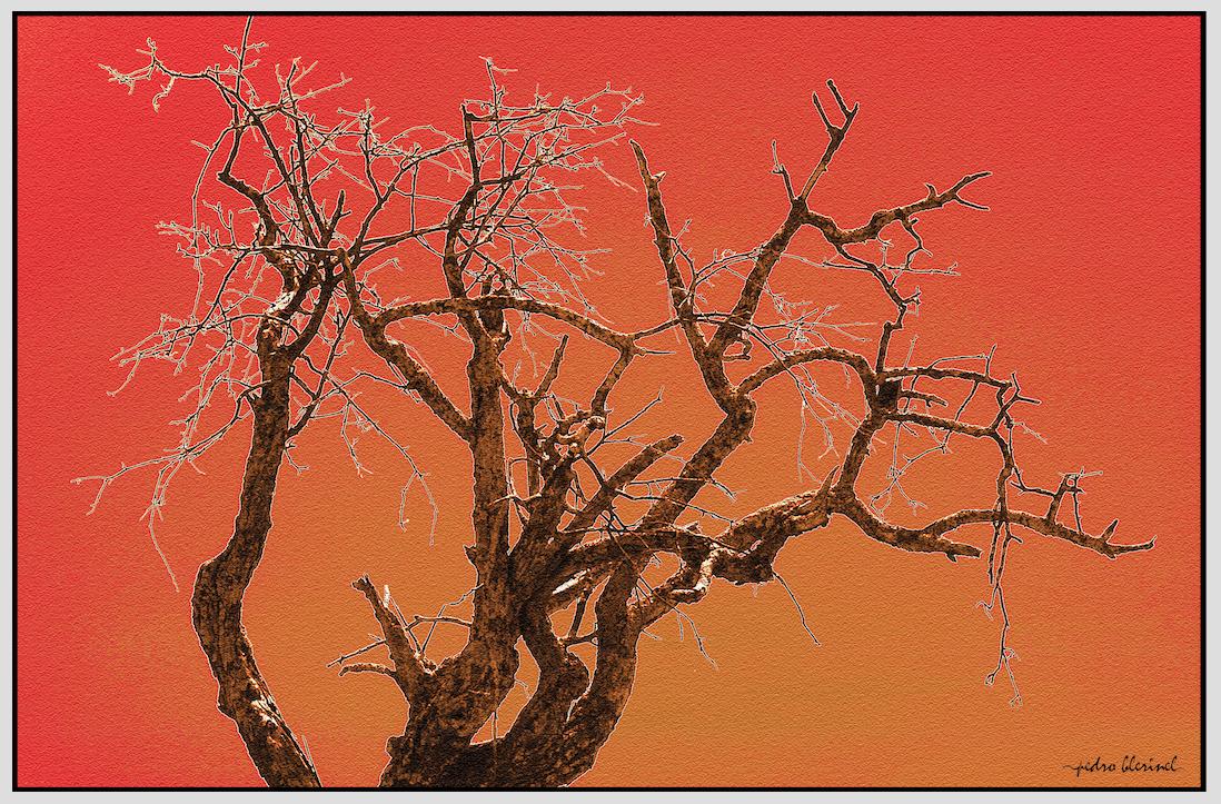 GARD : l'arbre de vie (22/02/17)