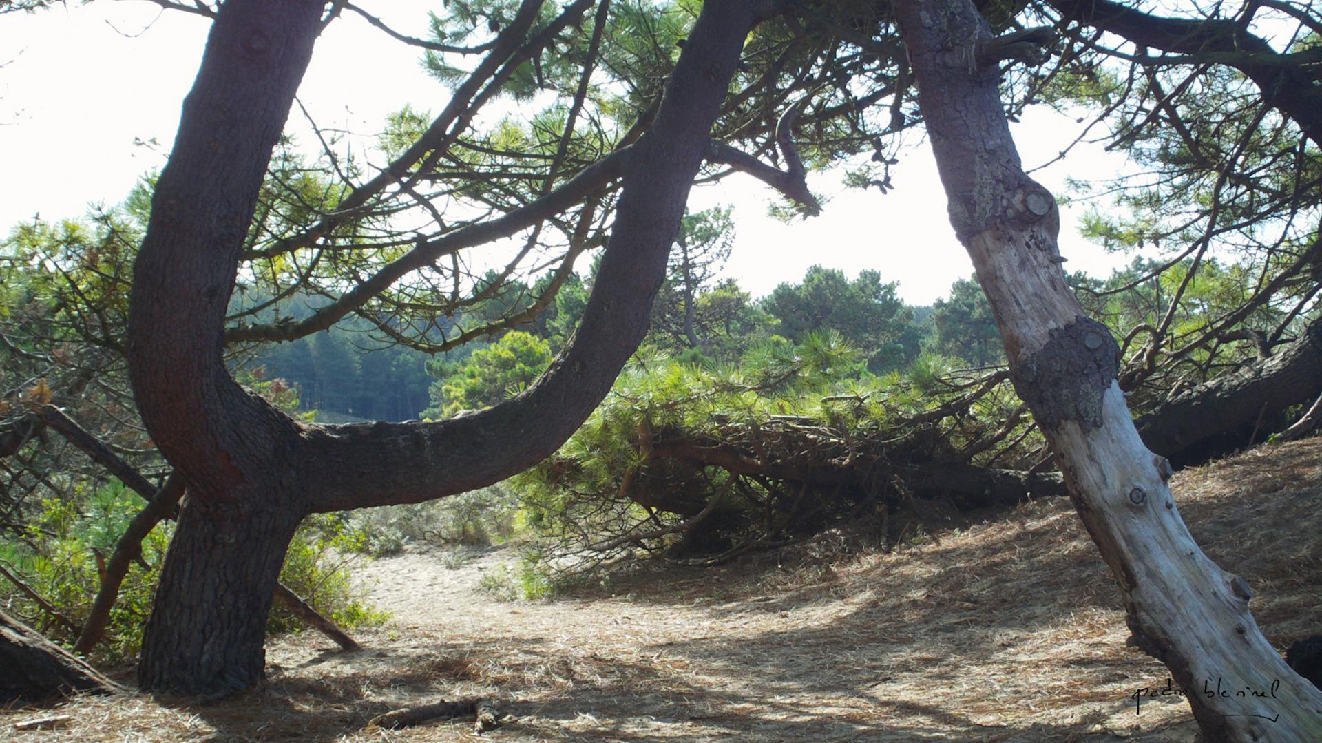 l'arbre reposoir