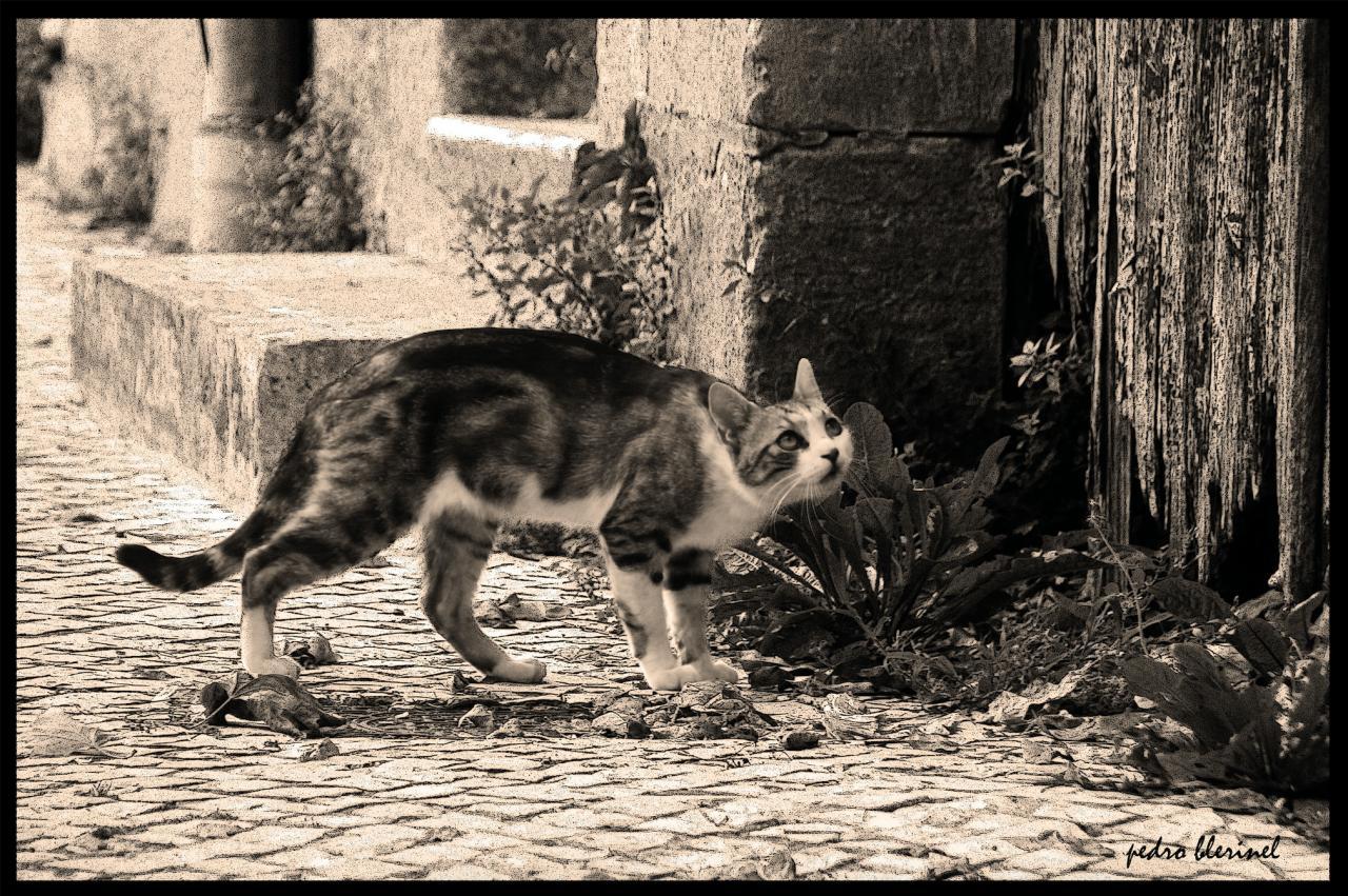 le chat bada bada (18/07/17)