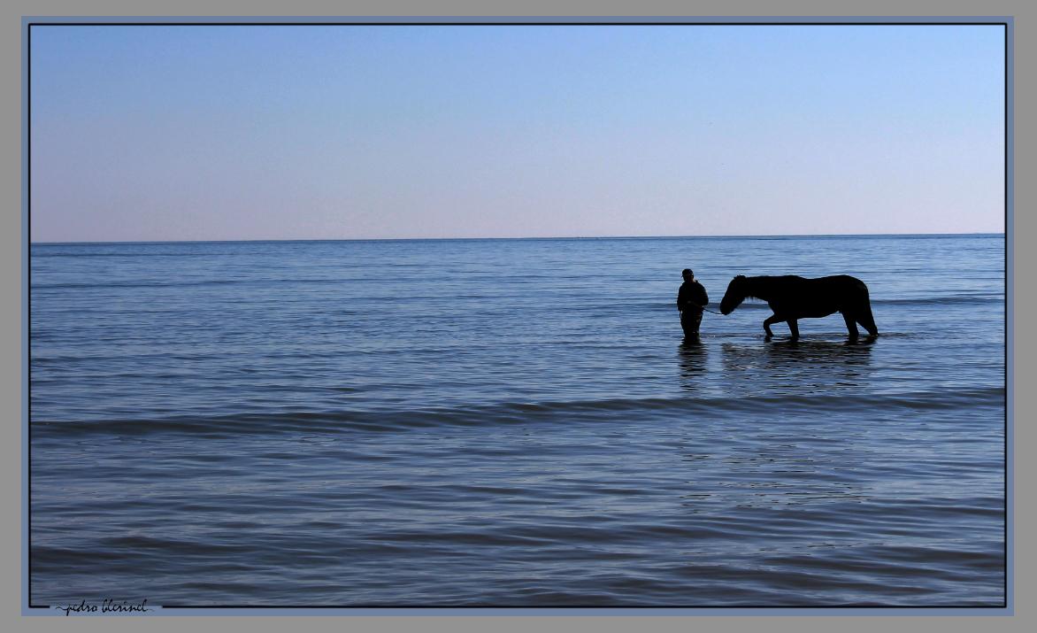 LA BAULE : le cheval et la mer (13/01/17)