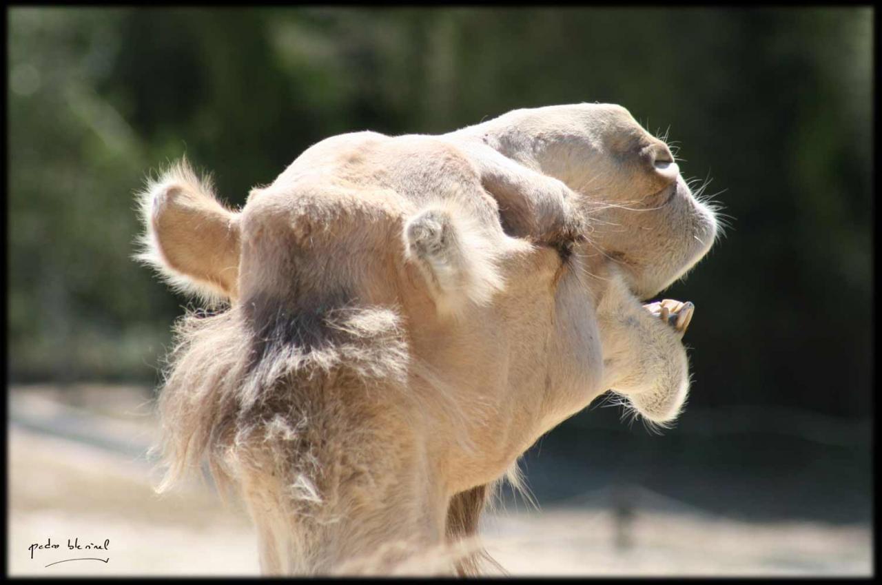 La vie des bêtes : le mépris (17/04/17)