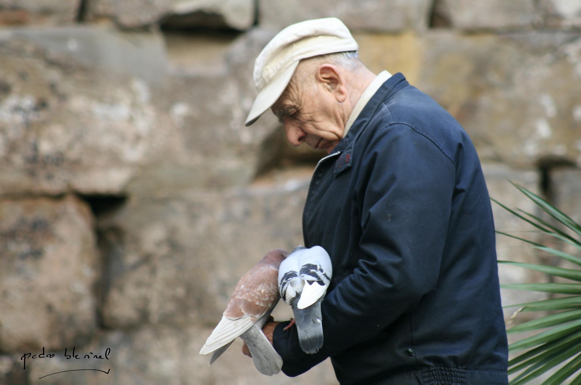 pigeons catalans