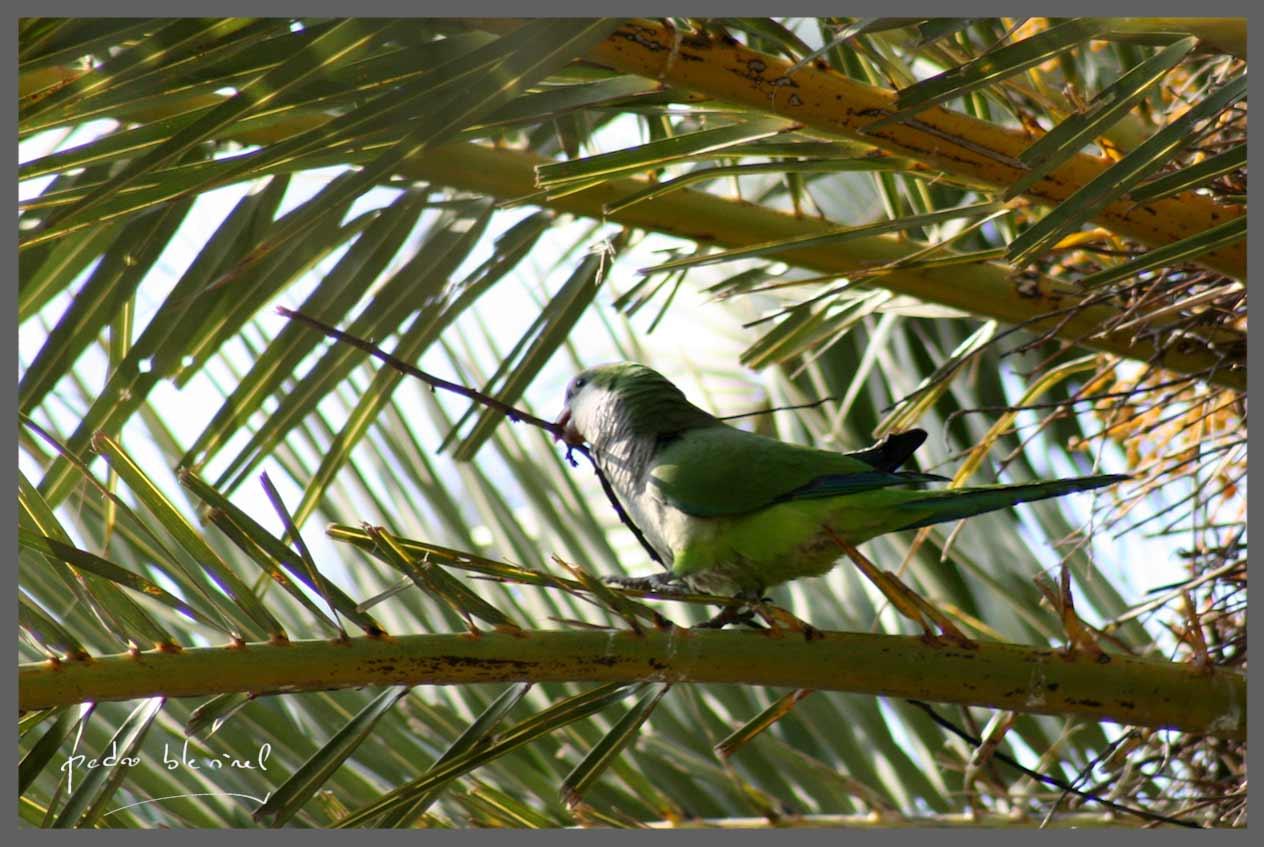 Préparation du nid (02/05/17)