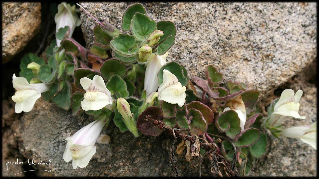 Printemps en Ardèche : la beauté (04/04/17)