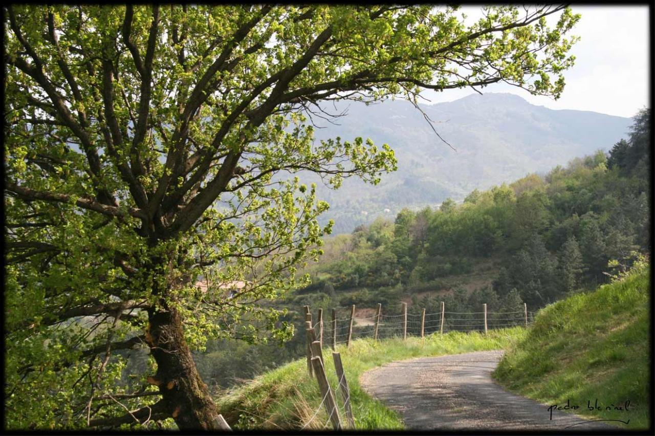 Printemps en Ardèche: le chemin (02/04/17)