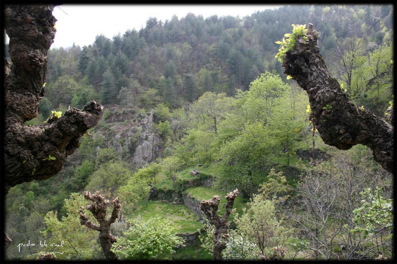 Printemps en Ardèche : les terrasses (07/04/17)