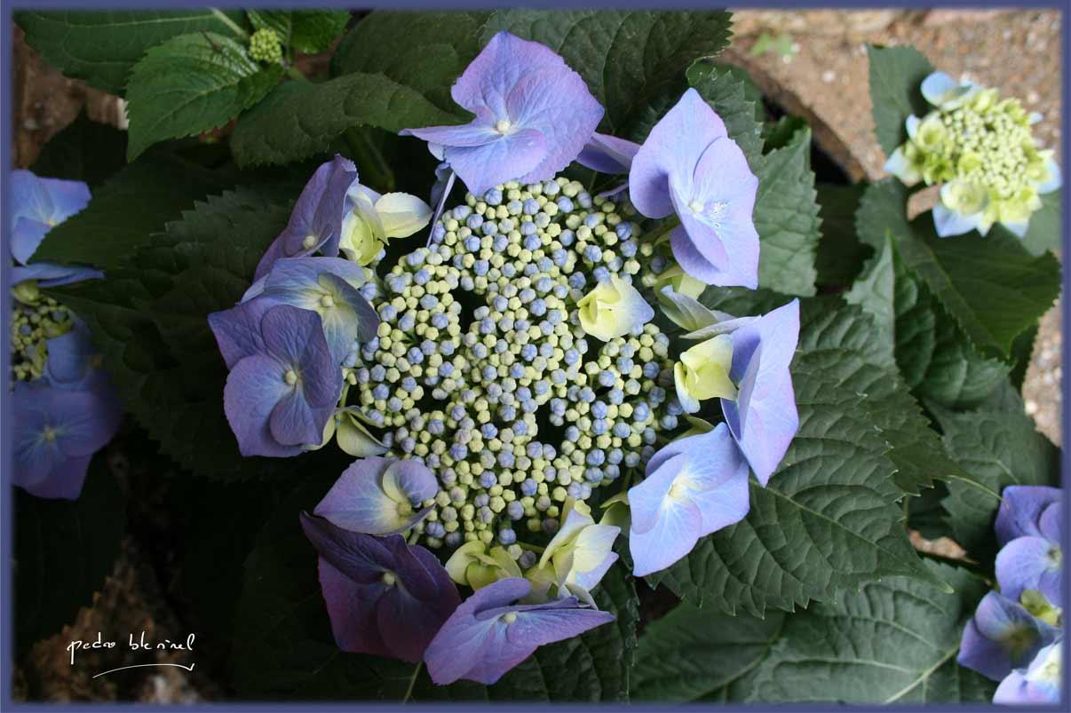 Printemps en Ardèche : floraison (01/04/17)