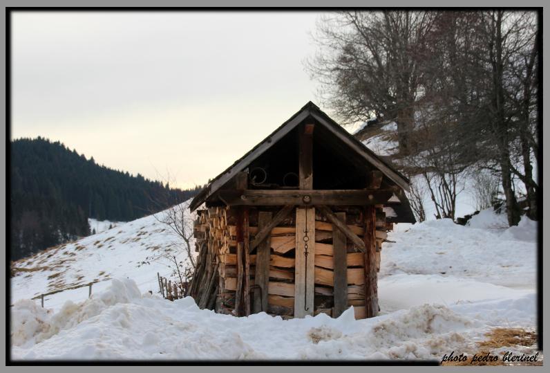 CHARTREUSE : réserve de bois (31/01/17)