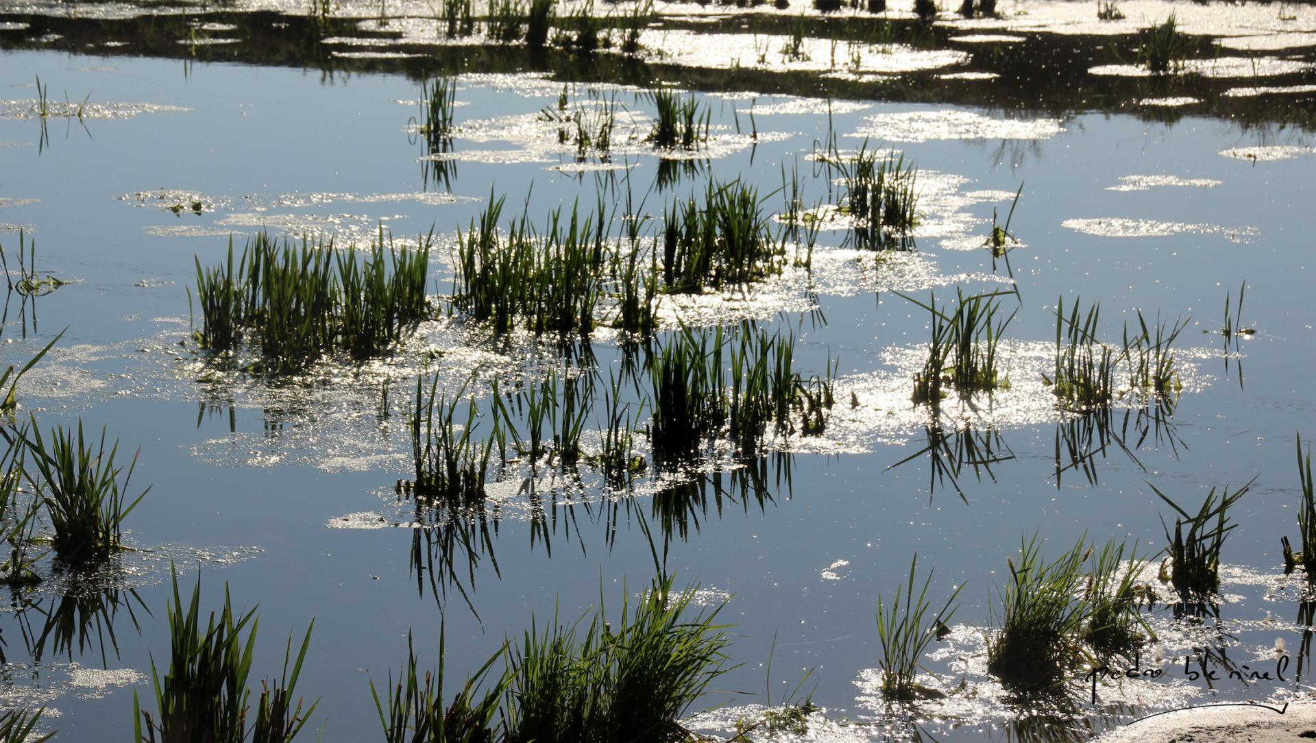 reflets de rizière