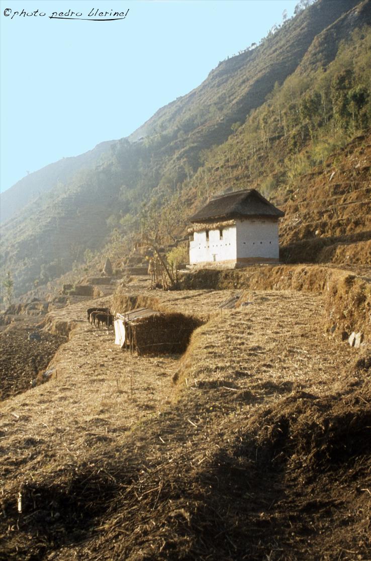 Nepal04